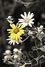 Yellow II by PhotosByHealy