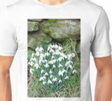 Snowdrops by the Wall Unisex T-Shirt
