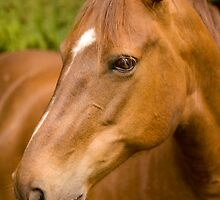 Beautiful Brown by photodivaanna
