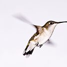 Hummingbird by Edward Myers