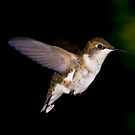 Hummingbird 3 by Edward Myers