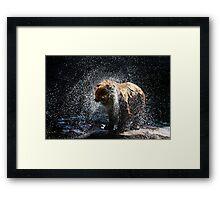 Big Splash Framed Print