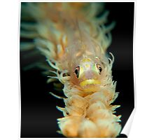 whip coral goby Poster
