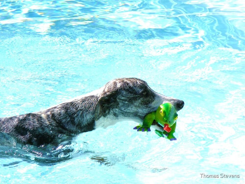 Kermit Needs Help !  by Thomas Stevens