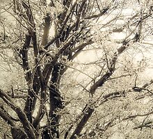 Frosted Tree by Vicki Field