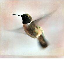 Black-chinned Hummingbird Photographic Print