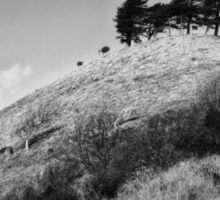 Colmers Hill -  Black and white Sticker