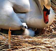 I Love You Mum by Clive