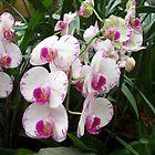 Exotic Beautiful Flowers by Joseph Green