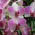 Beautiful,Exotic Flower by Joseph Green