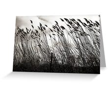 Bending in the Wind  Greeting Card