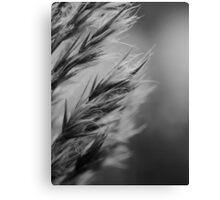 Grass no longer green Canvas Print