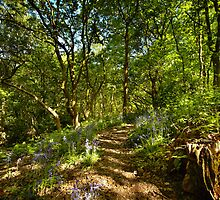 Bluebell Woodland Path by Andy Freer