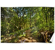 Bluebell Woodland Path Poster
