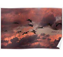Pelican Sunset Flight Poster