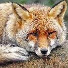 Foxy eyes by Alan Mattison