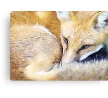 Resting Red Fox Canvas Print