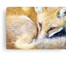 Resting Red Fox Canvas Print