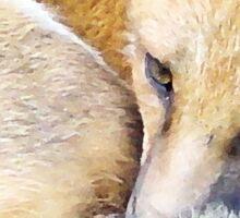 Resting Red Fox Sticker