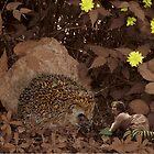 Prickly Pals - A garden adventure. by Susie Hawkins