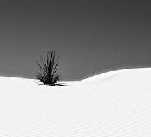 YUCCA / HORREUR by Thomas Barker-Detwiler