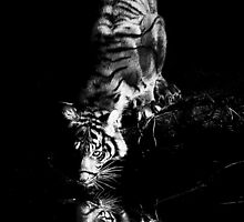 Tiger in Black and White by Annette Blattman