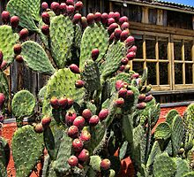 Prickly Pears by Renee D. Miranda