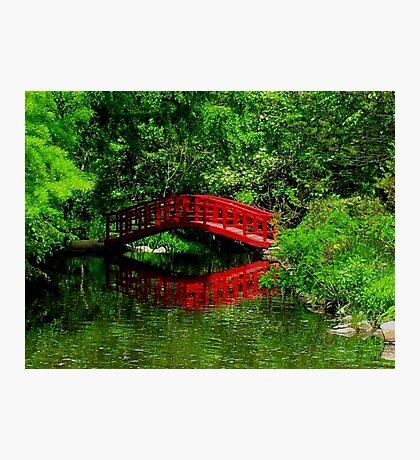 Bridge in the Woods Photographic Print