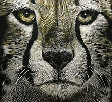 Cheetah by Chris Perry