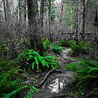 The Ferns by Shawnna Taylor