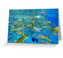 Blue sea and fishes Greeting Card