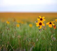 Prairie Wildflowers by Jerome Petteys