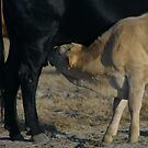 nothing better than mother's milk by fototaker