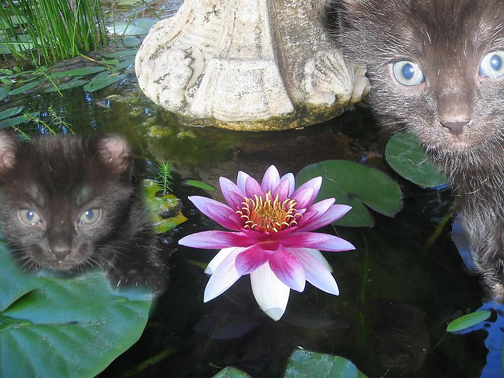 Kittens in the fish pond by Debbie  Jones