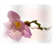 Caterpillar Freesia Poster