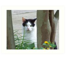 Cat Curiously Looking Through The Trees Art Print