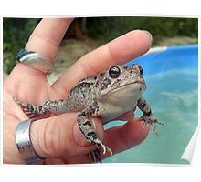 frog in hand Poster