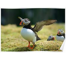 Puffin I Poster