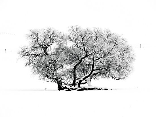 Tree In Winter by hastypudding