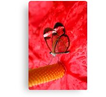 Glasswing on Anthurium Canvas Print