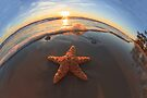 Two Stars by William C. Gladish