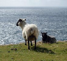 The sheep and the sea by Esther  Moliné