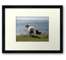 The sheep and the sea Framed Print