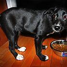 Puppy Eyes by TickerGirl