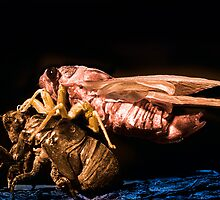 Cicada by Jim Haley