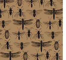 Entomology studies pattern by djrbennett