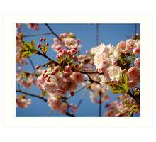 Cherry blossom, Spring morning sky Art Print
