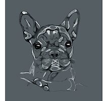 Sketchy Frenchie Photographic Print