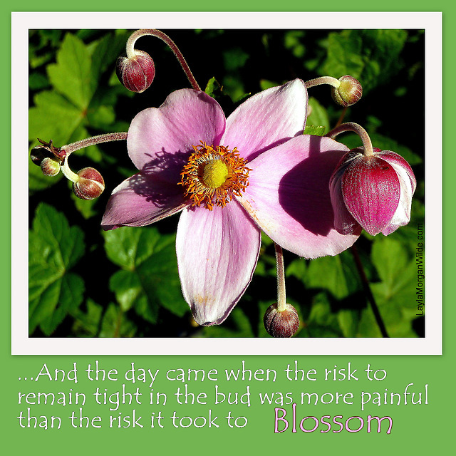 Take the risk to blossom by Layla Morgan Wilde
