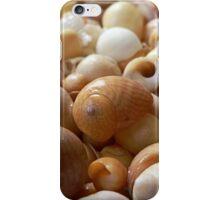 Seashells 1c iPhone Case/Skin